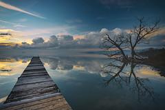 Lost in the mirror (Cristiano Pelagracci) Tags: trasimeno mirror nature sunset landscape umbria italy tree wood
