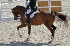 _MG_5630 (dreiwn) Tags: dressurprüfung dressurreiten dressurpferd ridingarena reitturnier reiten reitplatz reitverein reitsport ridingclub equestrian horse horseback horseriding horseshow pferdesport pferd pony pferde dressur dressuur dressyr dressage