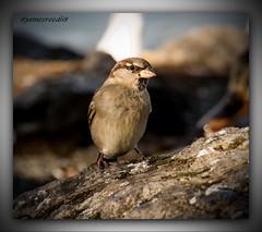intermittent du spectacle (jamesreed68) Tags: oiseau animal