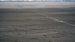 Open (De Rode Olifant) Tags: marjansmeijsters schiermonnikoog beach quote open henrydavidthoreau waddensea thenetherlands