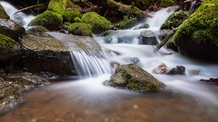 Small Falls (Matthew James Lewis) Tags: washingtonstate water washington winter rocks moss stream sticks longexposure landscape ferns olympicpeninsula olympicnationalforest bigquilvalley