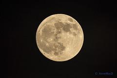 The Moon 2019.01.20 (AnnieMacD) Tags: moon applecross westerross scotland