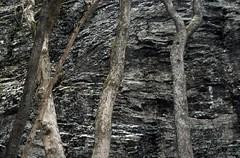 rhn01378F (m-klueber.de) Tags: rhn01378f rhn01378 20040104 hoherhön hochrhön basalt fels vulkanismus erstarrung vulkanit gestein felswand rhön deutschland 2004 mkbildkatalog