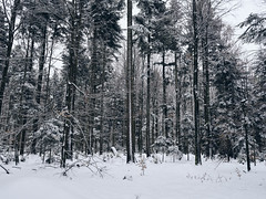 Schnee im Schwarzwald (Andreas Gugau) Tags: schwarzwald black forest winter schnee snow cold ice landscape nature lanschaft natur berge mountains hills outdoor wald bäume tree baum trees badenwürttemberg derutschland deu