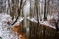 Late fall (prokhorov.victor) Tags: осень природа пейзаж снег отражение вода деревья