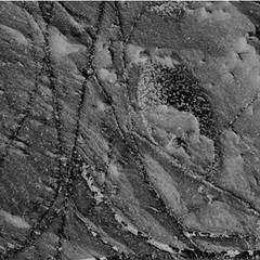 Not a Thark Egg on Mars 2 (sjrankin) Tags: 2november2018 edited nasa mars msl curiosity galecrater closeup dust sand vein lightcolored speckled rocks 2217mh0007060000802993e01dxxx grayscale