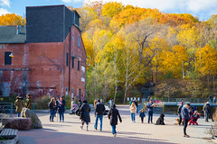Busy Day @ The Evergreen Brickworks (A Great Capture) Tags: agreatcapture agc wwwagreatcapturecom adjm ash2276 ashleylduffus ald mobilejay jamesmitchell toronto on ontario canada canadian photographer northamerica torontoexplore fall autumn automne herbst autunno otoño 2018 cold weather landscape paisaje paysage landschaft colours colors colourful colorful light sun sunny sunshine sunlight eos digital dslr lens canon 6d mark ii 2470mm urbannature scenery outdoor scenic outdoors outside vibrant cheerful vivid bright architecture architektur arquitectura design woods trees tree arbre forest wald árvore leaves leaf foliage autumnleaves
