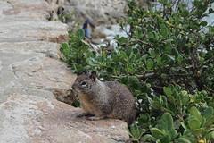 IMG_10932 (mudsharkalex) Tags: california pacificgrove pacificgroveca loverspointpark