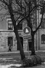 Gone ... (LENS.ART Photographie) Tags: stockholm street weihnachtsbaum jul monochrom schwarzweis nikon urban schweden sverige city stadt d7200 bw sw