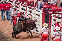 Calgary Stampede 2016 (tallhuskymike) Tags: calgarystampede event calgary rodeo stampede cowboy bull bullriding alberta action 2016 outdoors prorodeo