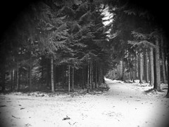 and it´s a road that leads to nowhere (undefinable moods) Tags: nowhere leading hiking travel journey woods forest trees blackwhite bnw bw branches snow vignette path way camino forestlover blackforest darkart moody breathtakinglandscapes