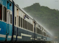 Madgaon Jan Shatabdi on heavy downpour at Panval Nadi Viaduct ! (Vijesh Kannan) Tags: indianphotography indiarural raining monsoon konkanrailways madgaon janshatabdi panvalnadi viaduct railroad railfanning