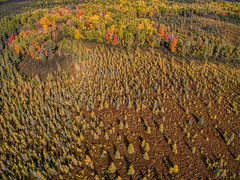Aerial Views of Autumn Colors in North East Minnesota (JacobBoomsma) Tags: lake trees falllandscape fall minnesota forest hill plane island aspen soudan maple north blue woods highangleview above landscape state park duluth fallcolor colorful autumnleaves autumn fallleaves pine