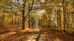 Autumn colors (Alex Verweij) Tags: autumn herfst sgravenland holland wandeling bos kleur gooi bladeren color coleur tree trees boom bomen canon 5d softfocus alexverweij soft sun zon sunlight zonlicht pad path