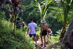 This seemed to be the dress norm among European tourists in Bali (shankar s.) Tags: seasia indonesia java bali islandparadise baliisland touristdestination ubudbali stepformofagriculture lush green emeraldgreen terracedricefields paddyfield ricepaddies ricefield tegallalangriceterraces