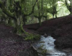 El bosque encantado (azucena G. De Salazar) Tags: bosque basoa forest otzarreta bizkaia euskalherria euskadi basquecountry paisvasco olor agua river raices