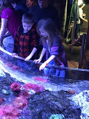 "2018-03-24-to-30-minnesotta-to-see-adam-and-sara-curl-with-family-aquarium-6_31076033478_o • <a style=""font-size:0.8em;"" href=""http://www.flickr.com/photos/109120354@N07/32346455868/"" target=""_blank"">View on Flickr</a>"