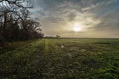 december 2017 at the fields (take 2) (strongestlight) Tags: dessau dessauroslau waldersee schwedenwall feld acker sonne wolken clouds ultraweitwinkel wideangle sony 1018 landscape landschaft sun alpha a6000