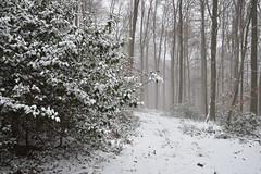 Les premières neiges sont tombées (Excalibur67) Tags: nikon d750 sigma globalvision art 24105f4dgoshsma paysage landscape forest foréts arbres trees vosgesdunord nature neige snow