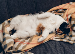 *** (donnicky) Tags: cat closedeyes domesticanimal home indoors laziness lying mimi nopeople oneanimal pet publicsec rest sleeping sofa лилу