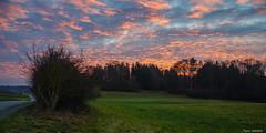 Burning Sky (peter-goettlich) Tags: rotewolken redclouds sunset road starnberg bayern bavaria deutschland germany forest trees landsacpe landschaft bäume wald afternoon evening dusk