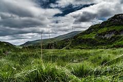 The Grass was greener.... (*Capture the Moment*) Tags: 2018 clouds farbdominanz hikingtourhimmel holiday ireland irland june killarneynationalpark landscape landschaft lordbrandon´scottage muckrosshouse sky sonya6300 sonye18200mmoss sonyilce6300 trip wetter wolken cloudy green grün wolkig