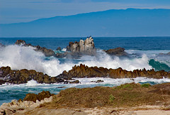 Kelly's 17-Mile Drive Favorites, Pacific Grove, CA 2018 (Northwest Lovers) Tags: california pacificgrove 17miledrive