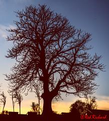 Good Morning! (red.richard) Tags: tree dawn sky morning silhouette blue scotland nikon d800
