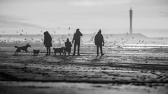 Fighting the burn-out walk - Z (Drummerdelight) Tags: dogs dogandowner shillouettes beach seaside seagulls dehaan
