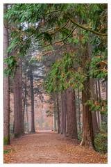 Autumn scene (Mariannevanderwesten) Tags: autumn herfst nikon nature natuur forrest bos trees bomen