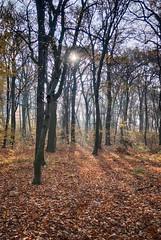November (vmonatko) Tags: grass leafs tree park forest sun nature autumn november g9x g9 g9xmii g9xmarkii light