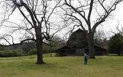 Curtis walks toward a barn on his family property. This barn was formerly used as a shearing station for sheep, to collect wool each season.