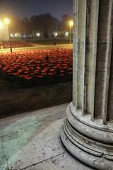 Flower Perspective (orkomedix) Tags: canon eosr night world war wwi poppies koeningsplatz art project never again niemalswieder mohnblumen munich germany rf24105f4l fog mist remembrance