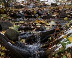 Autumn Stream (mausgabe) Tags: olympus em1 olympusm40150mmf28 olympusmc14 nyc centralpark theramble stream autumn leaves snow