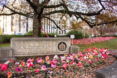 20181111_0138_1 (Bruce McPherson) Tags: brucemcphersonphotography poppyproject shaughnessyschoolpoppyproject shaughnessyelementaryschoolpoppyproject colourful remembranceday memorial creative vancouvercityhall vancouver bc canada
