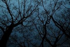 夜の空の星の影の (atacamaki) Tags: xt2 18 xf f2r fujifilm jpeg撮って出し atacamaki japan night tree shadow star nature blue 星空 ibaraki かすみがうら 出島の家