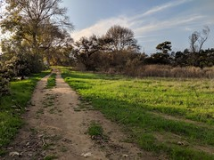 Not a country road (2/2) (Kelson) Tags: california madronamarsh marsh nature hike southbay torrance plants trees road dirtroad