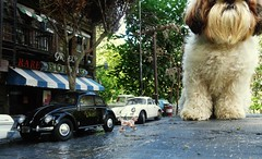 Greece Singers Tobby 2 (gpholtz) Tags: diorama miniatures 118 diecast dog shihtzu