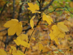 Herfstimpressie (nikjanssen) Tags: autumn herfst patterns vintagelenses fujinon55mm22 bokeh dof