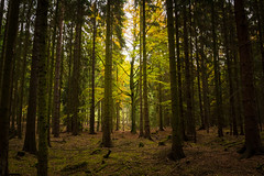 Always why (Petr Sýkora) Tags: les podzim nature forest trees shadows alone landscape