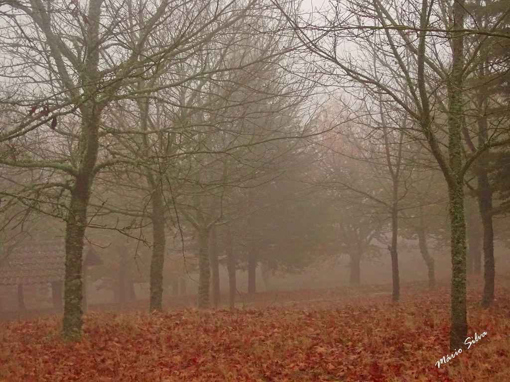 Águas Frias (Chaves) - ... as folhas caídas e a névoa ...