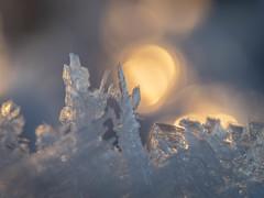 Winter warmth (Fjällkantsbon) Tags: makro foto rimfrost evamårtensson högland västerbottenslän sverige se rime frost hoarfrost macro lapland light sun