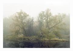 Local Pond - Astrum Color 125 (magnus.joensson) Tags: sweden swedish skåne trelleborg fog haze autumn november fujica st801 carl zeiss jenna ddr 50mm astrum color 125 svema m42 24x36 c41 pancolar