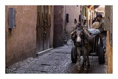 Marrakesh's donkey (alamond) Tags: donkey street streetphotography narrow medina marrakesh marocco cart canon 7d markii mkii llens ef 1740 f4 l usm alamond brane zalar
