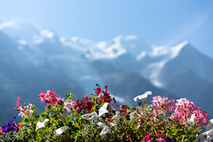 Rhône Alpes (©Andrey) Tags: alps chamonix mont blanc landscape plants outdoor warm colour bokeh a7rii rhône alpes france vacation good day sun blue cyan valley sel55f18z sonnartfe1855