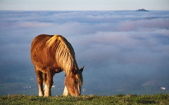 Up here. (JessieTlse) Tags: cheval horse landscape paysage nuage clouds countryside rural trait atmosphere bleu blue green high red roux winter hiver country amateur xt20 fujifilm
