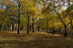 Alter Friedhof Karlsruhe (KaAuenwasser83) Tags: alterfriedhofkarlsruhe friedhof karlsruhe bäume baum laub blätter blatt herbst november sonne park anlage spielplatz wiese rasen gras stadt