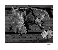 Browned (agianelo) Tags: leaf stick deck board monochrome bw bn blackandwhite