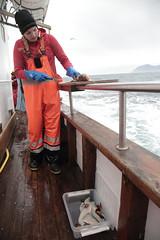 Fresh Fish Fillets (peterkelly) Tags: digital canon 6d europe iceland gadventures bestoficeland dalvik eyjafjörðurfjord whalewatching boat railing woman fish filleting fillet cod hat wooden deck water northatlanticocean knife