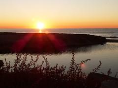Primer amanecer 2019 (12) (calafellvalo) Tags: amaneceralbasolcalafellseaalbadasunrise amanecer sunrise amanecerdelaño2019 alba albada sea mar calafellvalo contraluz calafell aves gaviotas